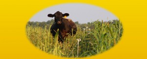 Cover photo for Winter Forage Field Day