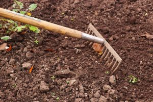 raking garden soil